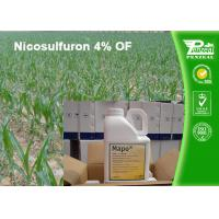 Best White Crystalline Or Powder Post Emergence Select Herbicide Nicosulfuron 4% OF wholesale