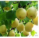 China Fruit Tree Insecticide Clofentezine 10% WP 25% SC acaricide CAS 74115-24-5 on sale