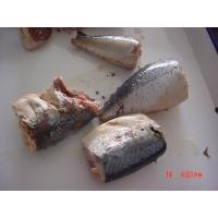 Best Canned Mackerel In Brine , Jack Mackerel Canned in Tomato Sauce No Artificial Additives wholesale