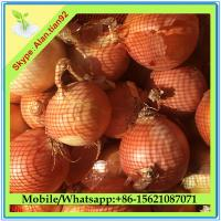 Buy cheap Fresh Onion Importer From Dubai from wholesalers