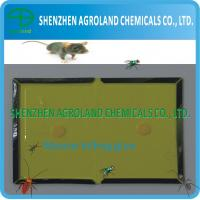 Best Non Toxic Mouse Glue Boards , Disposable Mouse Rat Killing Glue wholesale