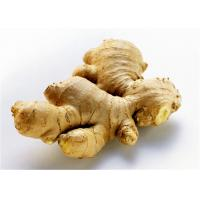 Buy cheap 2016 New Fresh China Yellow Color Ginger Export to Chittagong, Bangladesh, from wholesalers