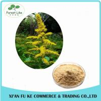 Best Water Soluble Witch Hazel P.E./Herbal Hamamelis Virginiana Extract for Cosmetic wholesale