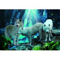 Best Pet / Pvc / PP Wolf Animal Photos Lenticular 3d Posters For Store Eco - Friendly wholesale