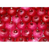 Fresh types red onions / Chinese Red Onion