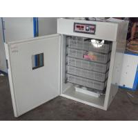 Best small egg incubator wholesale