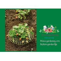Best Plastic Full Grown Garden Plant Supports / Strawberry Plant Supports wholesale