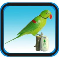 Buy cheap Wireless Doorbell Recordable Parrot 50-80M Remote Distance from wholesalers