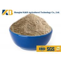 Best Natural Plant Based Protein Powder / Rice Protein Nutrition No Agglomeration wholesale