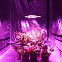 Buy cheap SMD Energy Efficient Grow Lights , Dimmable Hydroponics Indoor Plant Lights from wholesalers