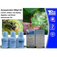 Best Azoxystribin 250% SC Systemic Fungicides Control Pathogens 131860-33-8 wholesale