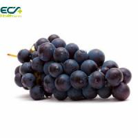 China Blood Circulation Black Currant Fruit Extract Powder , Antioxidant Food Supplements on sale