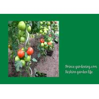 Best 8mm Colorful Spiral Plant Support , Durable Garden Spiral Tomato Stakes wholesale