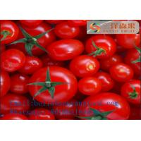 Best Canned Tomato Paste Tomato Ketchup Sachet Tomato paste Canned Puree wholesale
