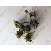 China Dried Ginseng flowers for traditional medicine or tea Ren shen hua on sale
