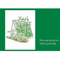 Best Cucumbers Garden Plant Trellis / Vegetable Garden Trellis Saves Space wholesale