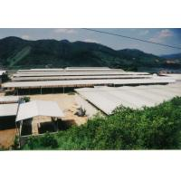 Quality Temporary Agricultural Steel Frame Buildings , Light Heavy  Multi Storey Steel Structure Building wholesale