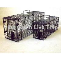 how to catch and relocate possum in mundaring