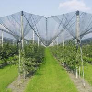 Best Anti-Hail Net for Trees,Garden,Vegetables and Fruit,3.6-5.0cm oepning,white,green,black wholesale