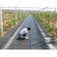Cheap Anti UV Plastic woven weed barrier fabric for strawberry garden for sale