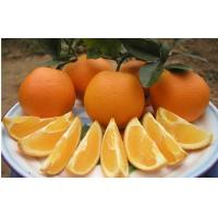 Buy cheap Vitamin C Fresh Navel Orange Seedless Contains Zinc , Protein For Long Time from wholesalers
