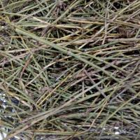 Dried EPHEDRA HERB segments natural Ephedrae herba whole parts for traditional