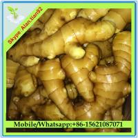 Buy cheap Chinese Fresh Ginger For Sale from wholesalers