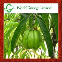 China Herbal Extract Garcinia cambogia extract HCA 50%-75% ingredient for weight loss on sale