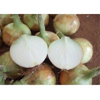 Best 2016 China Fresh Yellow Onion For Export New Crop Organic wholesale