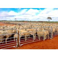 Best Portable Sheep Panels / Sheep Yard Panels Avoid Small Sheep Leave Out wholesale
