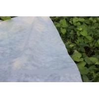 Details Of Eco Friendly Ground Cover Pp Agriculture