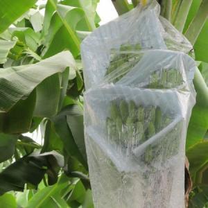 Best 800*1600 mm PE Banana Bunch Bag wholesale