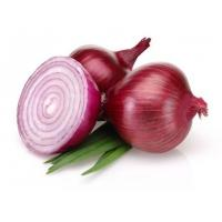 Best Healthy Natural Fresh Onion Green Products , No Irregular Shape wholesale