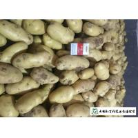 Best Nutritious Fresh Potato Stored In A Dry And Cool Place Prevent Germination wholesale
