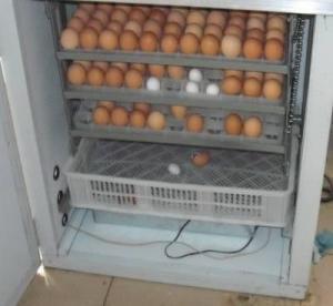 Best incubator chicken egg hatching machine 0086-13526735822 wholesale