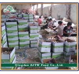 Qingdao ZJTW Food CO.,LTD