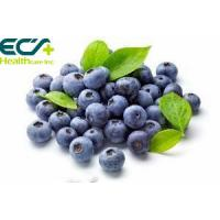 Best Blueberry powder; Freeze- Dried; Oraganic Food Ingredients; Beauty effect, prevent cancer; eyes care;antioxidant factor; wholesale