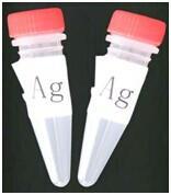 Cheap Methylenedioxymethamphetamine(MDMA) BSA conjugant for sale