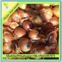 China fresh onion export to dubai / Red Onion/ Yellow Onion on sale
