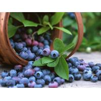 Bilberry P.E.  25% Anthocyanidins