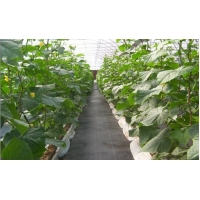 China Black Nonwoven Strawberry 60Gsm Weed Stop Fabric on sale