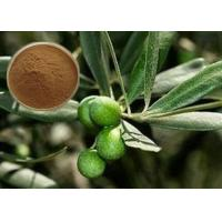 Best CAS 32619-42-4 Cosmetic Raw Materials Olive Leaf Extract Powder For Digestive System wholesale