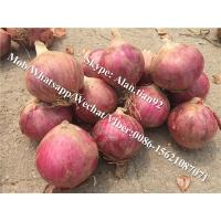 Cheap 5-7cm, Mesh bag Package Chinese Fresh Red Onion For All Market for sale