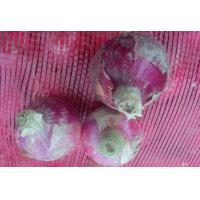 China Organic Anti-Inflammatory Red Natural Fresh Onion Contains Vitamin B6 , C, Appearance of prunosus onion on sale