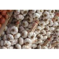 Buy cheap Fresh garlic for sale from wholesalers