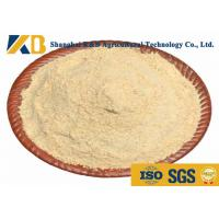 Best Non GMO Raw Rice Protein Powder Customized Package With 70% Protein Content wholesale