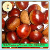 Buy cheap Fresh chestnut from wholesalers