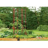 Best Durable Garden Metal Tomato Cages wholesale