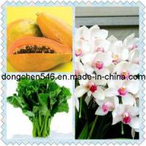 Best 1-Mcp 1-Methylcyclopropene Ethylene Blocker wholesale