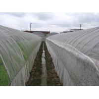 Best Anti Insect Net 50x35mesh,growing and agriculture using,greenhouse using  50-140g/m2  0.5m-6m width   black,white wholesale